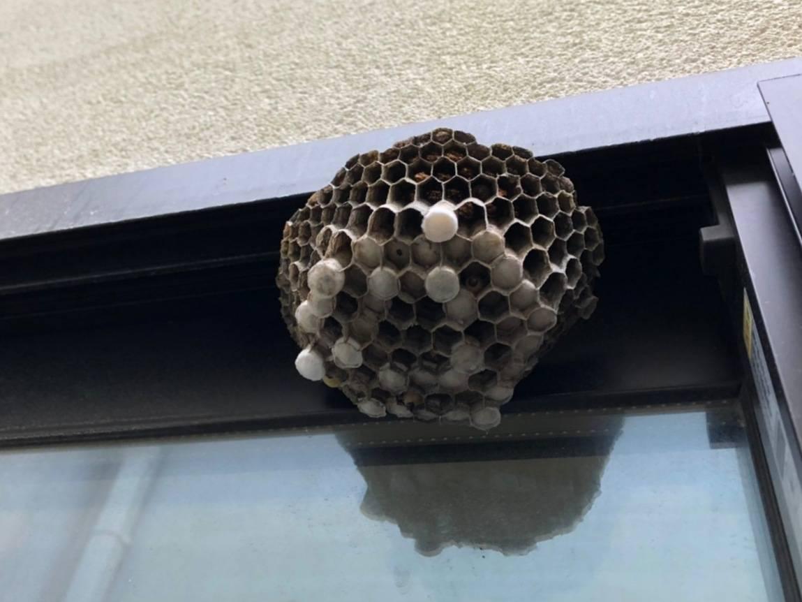 蜂の巣 駆除 ハチ退治 自分で