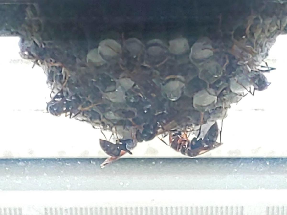 蜂の巣 除去 自分で おすすめスプレー