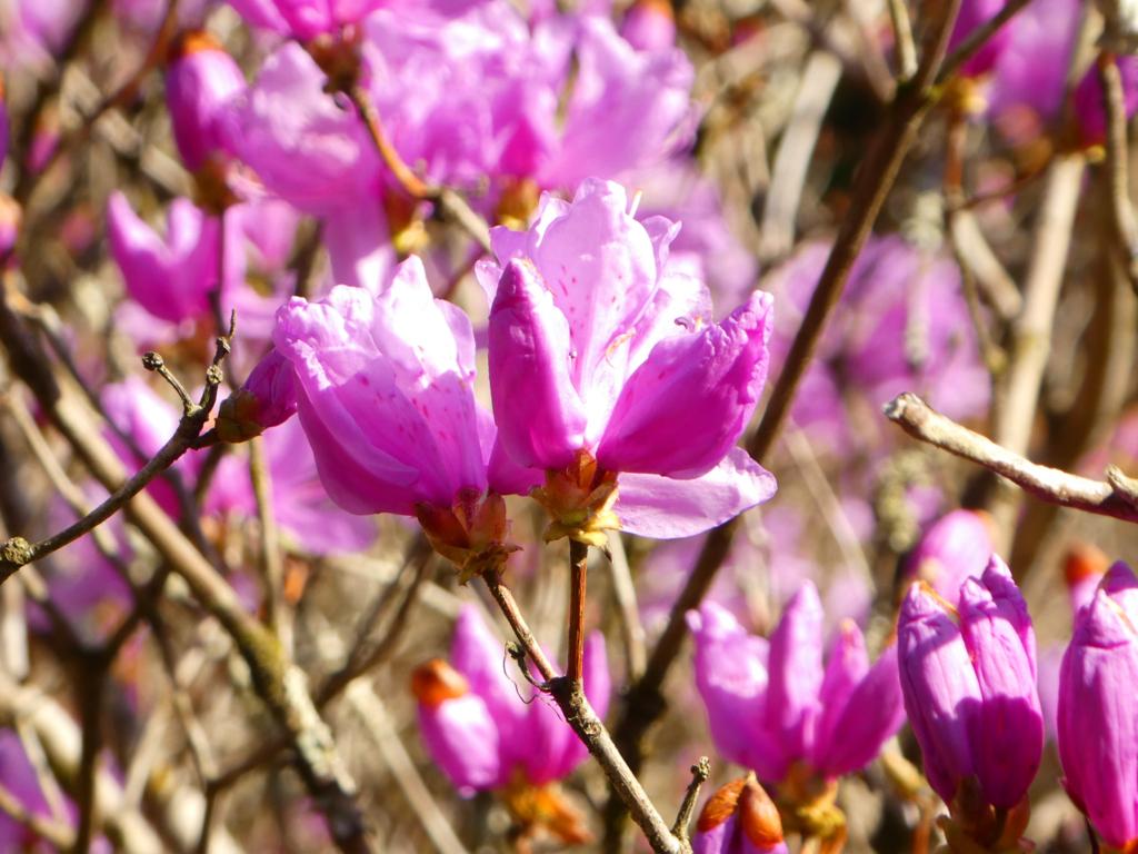 春の花 鹿児島