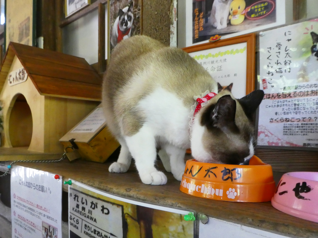 嘉例川駅 にゃん太郎
