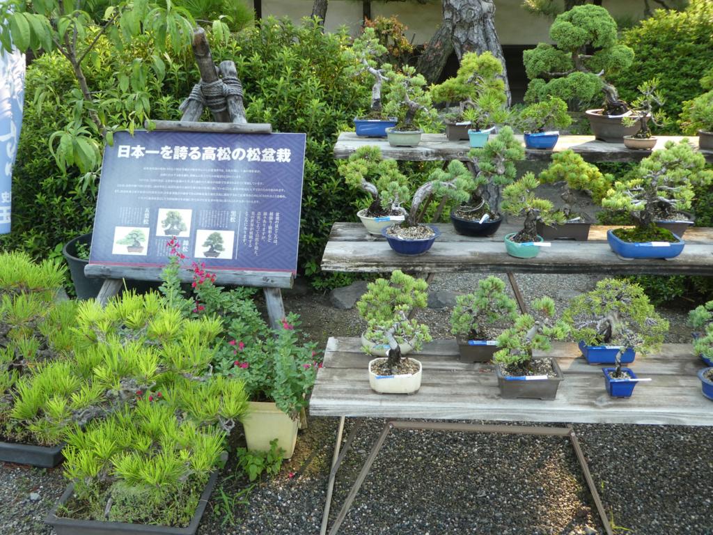 高松城 盆栽