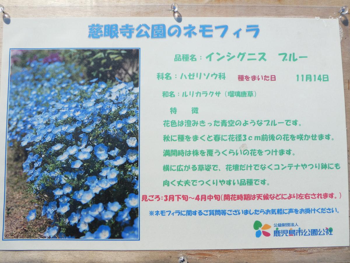 ネモフィラ 慈眼寺公園 2019