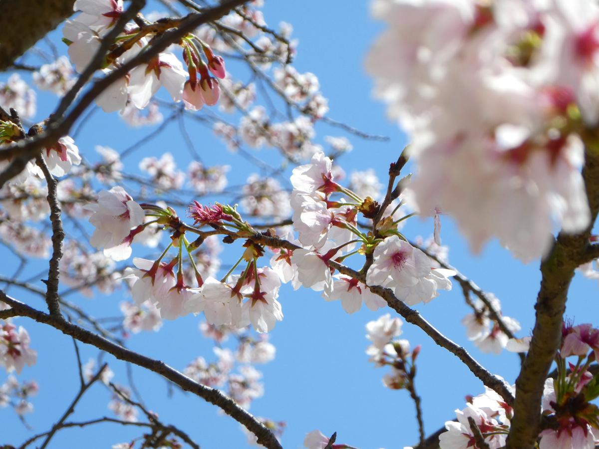 ふれあいスポーツランド 桜