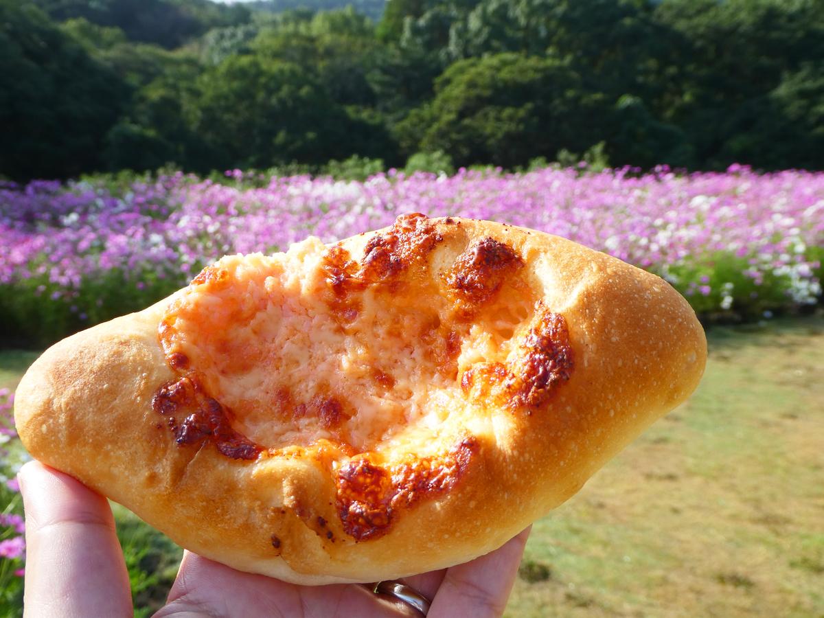 ダンケン メンタイ&チーズ