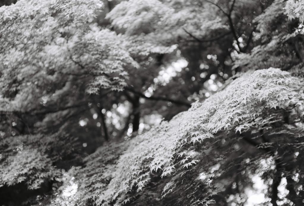 f:id:iguchitakekazu:20160630132441j:plain