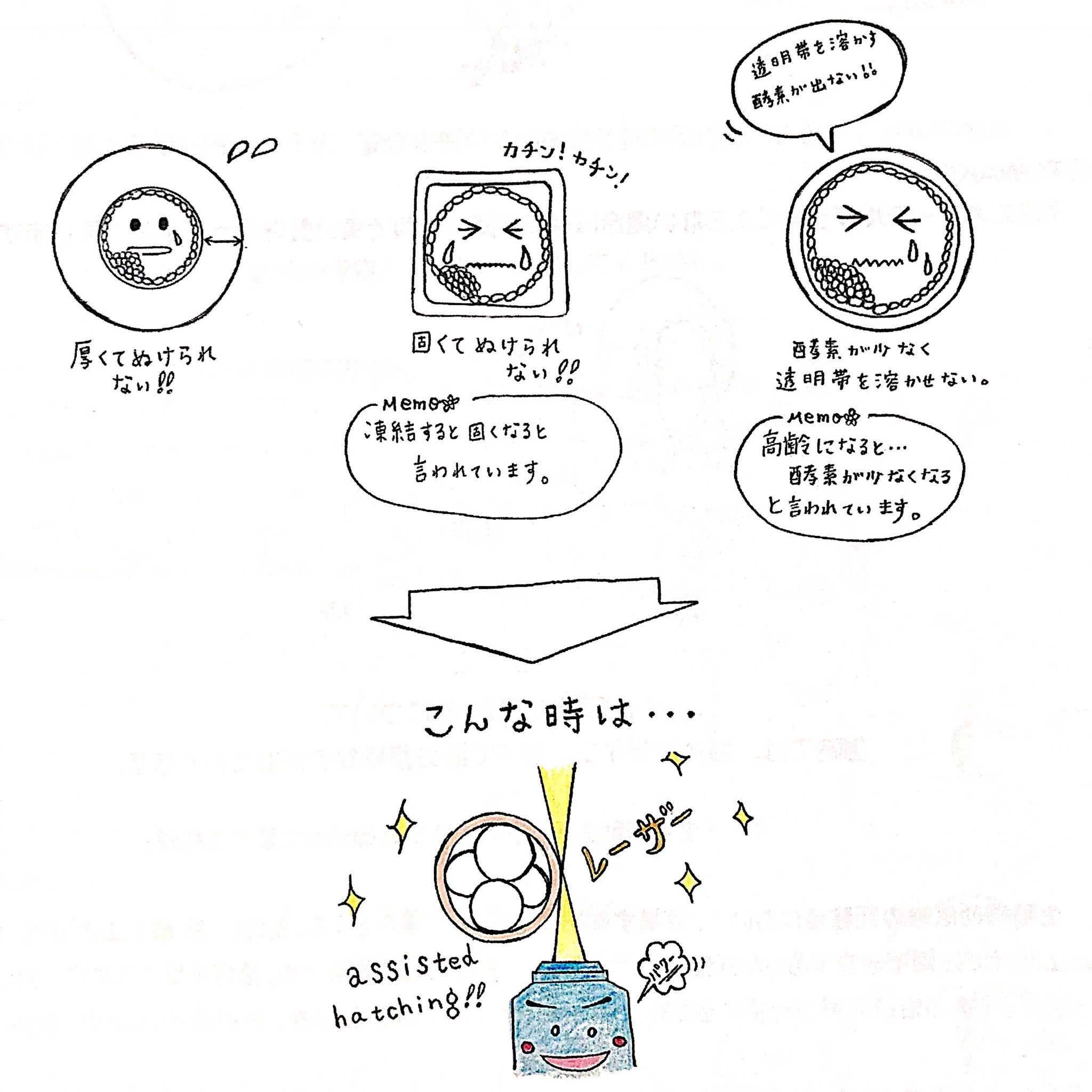 神奈川レデュースクリニックIVF説明会資料3