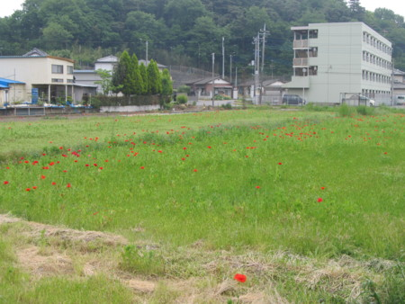 f:id:iirei:20120519200149j:image