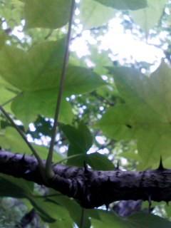 f:id:ijiruorg:20090627153323j:image