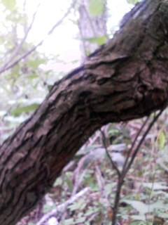 f:id:ijiruorg:20090627153350j:image