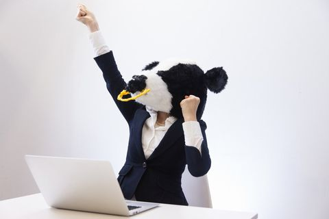 パソコンを前にガッツポーズする、牛。