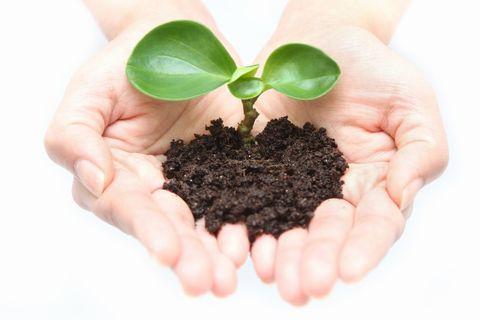 掌の土から芽が出ている。