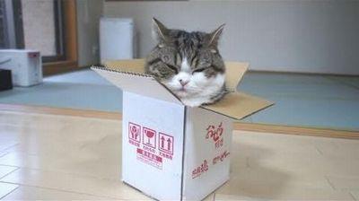 ダンボールにピッチリ収まった猫。