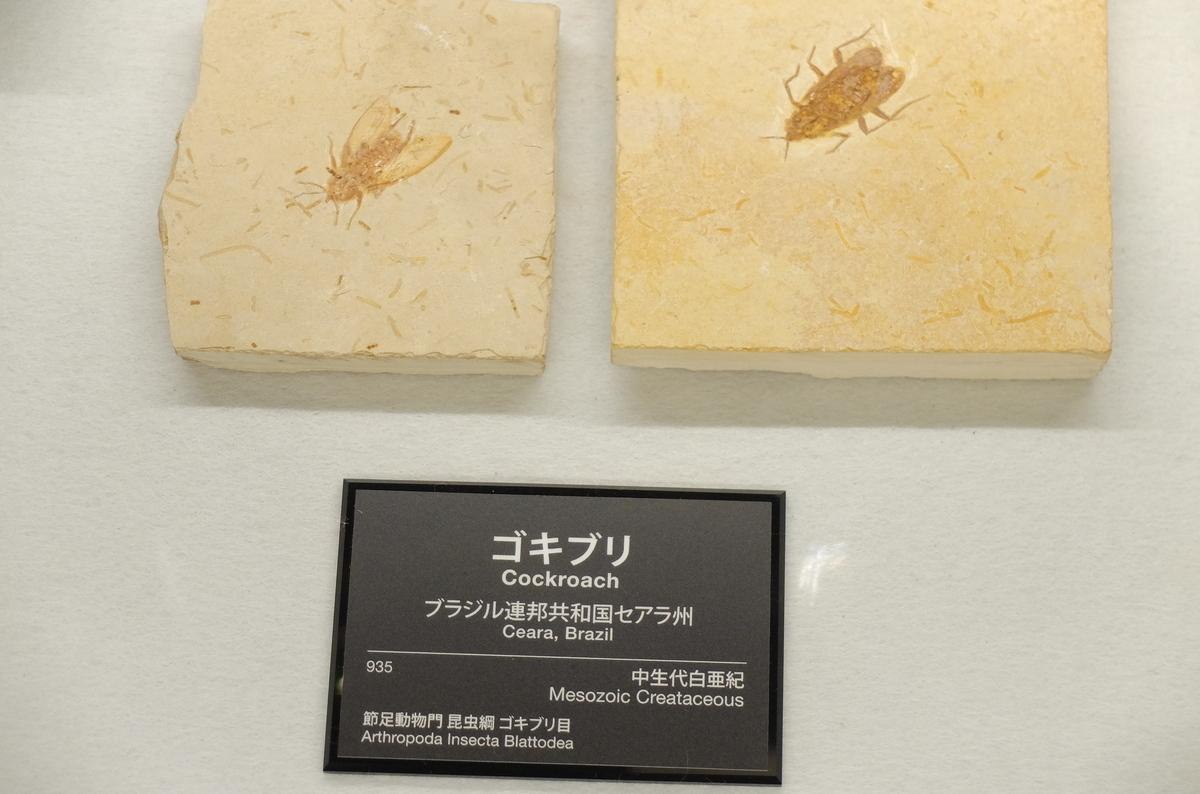 f:id:ikarikezuri:20210504062100j:plain