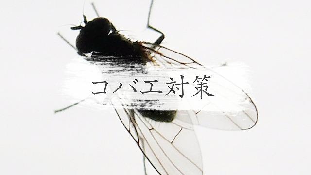 f:id:ikashiya:20170901001121j:plain
