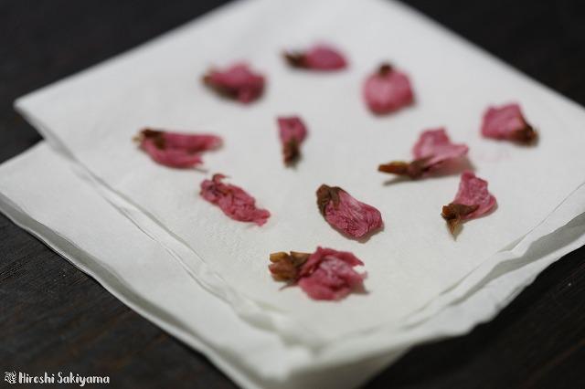 桜の花の水気をしっかり取る様子