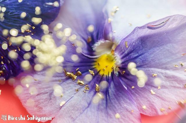 花のババロア5