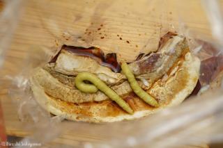 茹でた豚バラ肉をめんつゆ+醤油とわさびにつける様子