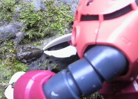 f:id:ikasumi:20090212174126j:image