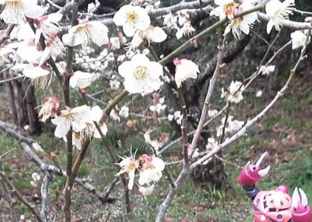 f:id:ikasumi:20090227165537j:image