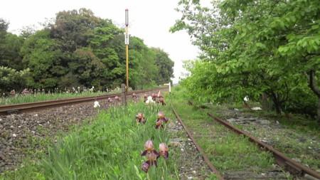 f:id:ikasumi:20090509000832j:image