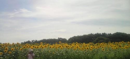f:id:ikasumi:20090718224536j:image