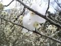 [梅][雪][北九州]2010.03.11