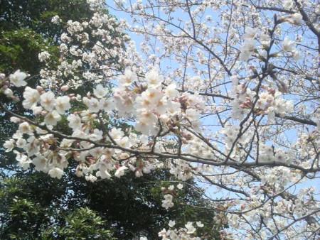 f:id:ikasumi:20100329143246j:image:h250