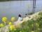 [遠賀川水辺館]遠賀川水辺館つり体験2010.04.08