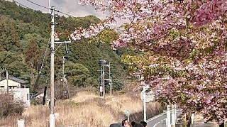 f:id:ikasumi:20200312104001j:plain