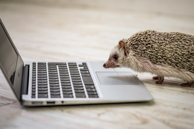 ハリネズミとパソコン