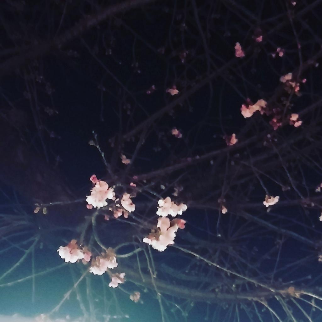f:id:ikechu:20170306060324j:plain