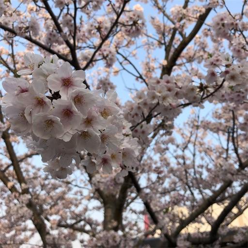 f:id:ikenagayoshie:20190407225428j:image