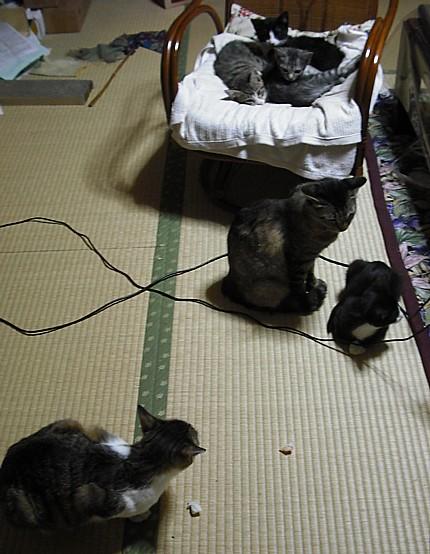 f:id:ikesanfromfr:20121021115233j:image