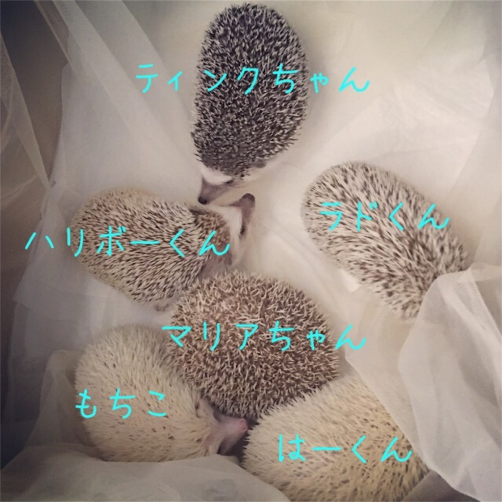 f:id:iketaro76:20170127192058j:image