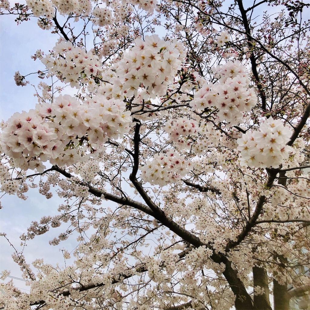 f:id:ikeyuki0712:20190328175701j:image