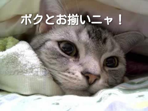 f:id:ikinarinurikabe:20180917213716p:plain