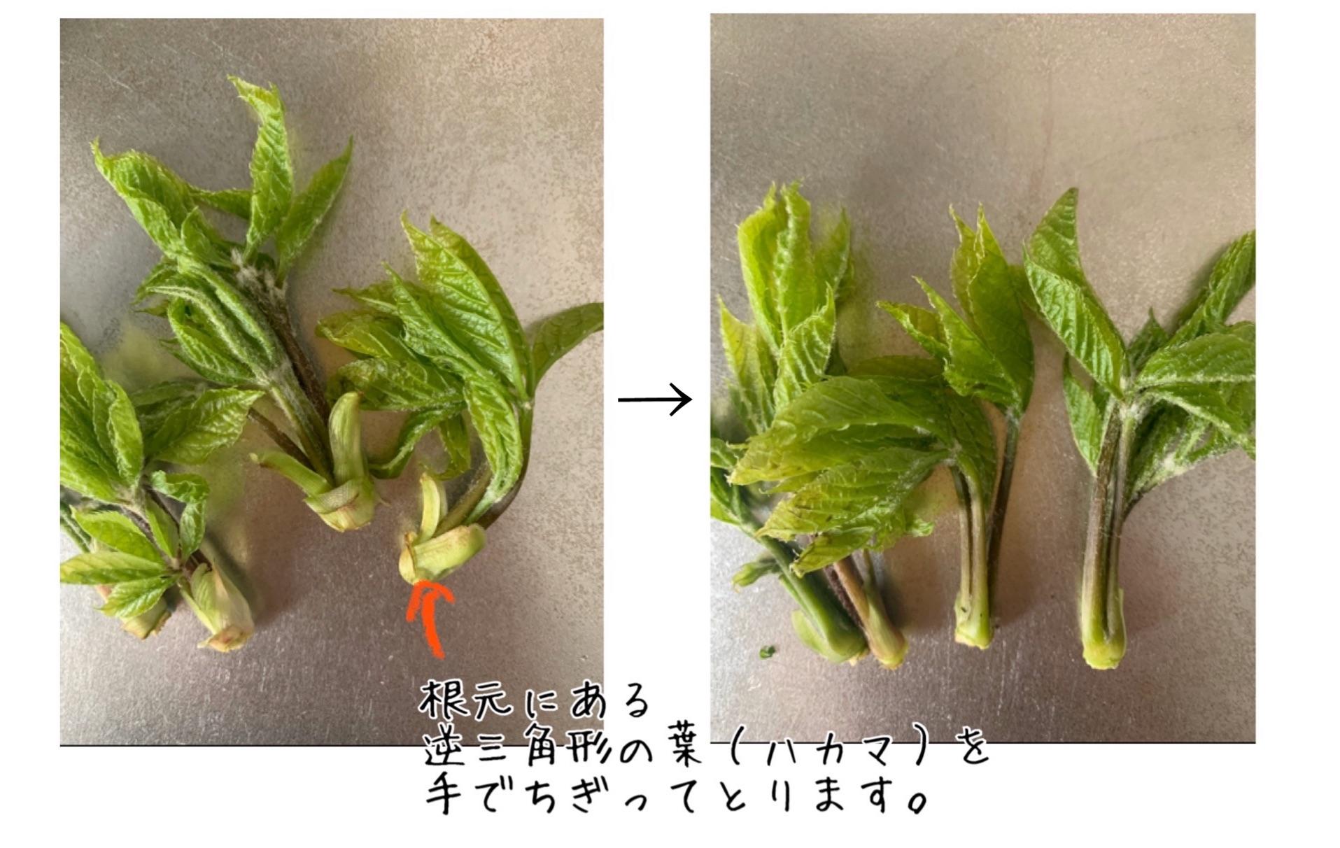 f:id:ikiruikeru43:20200502122523j:image