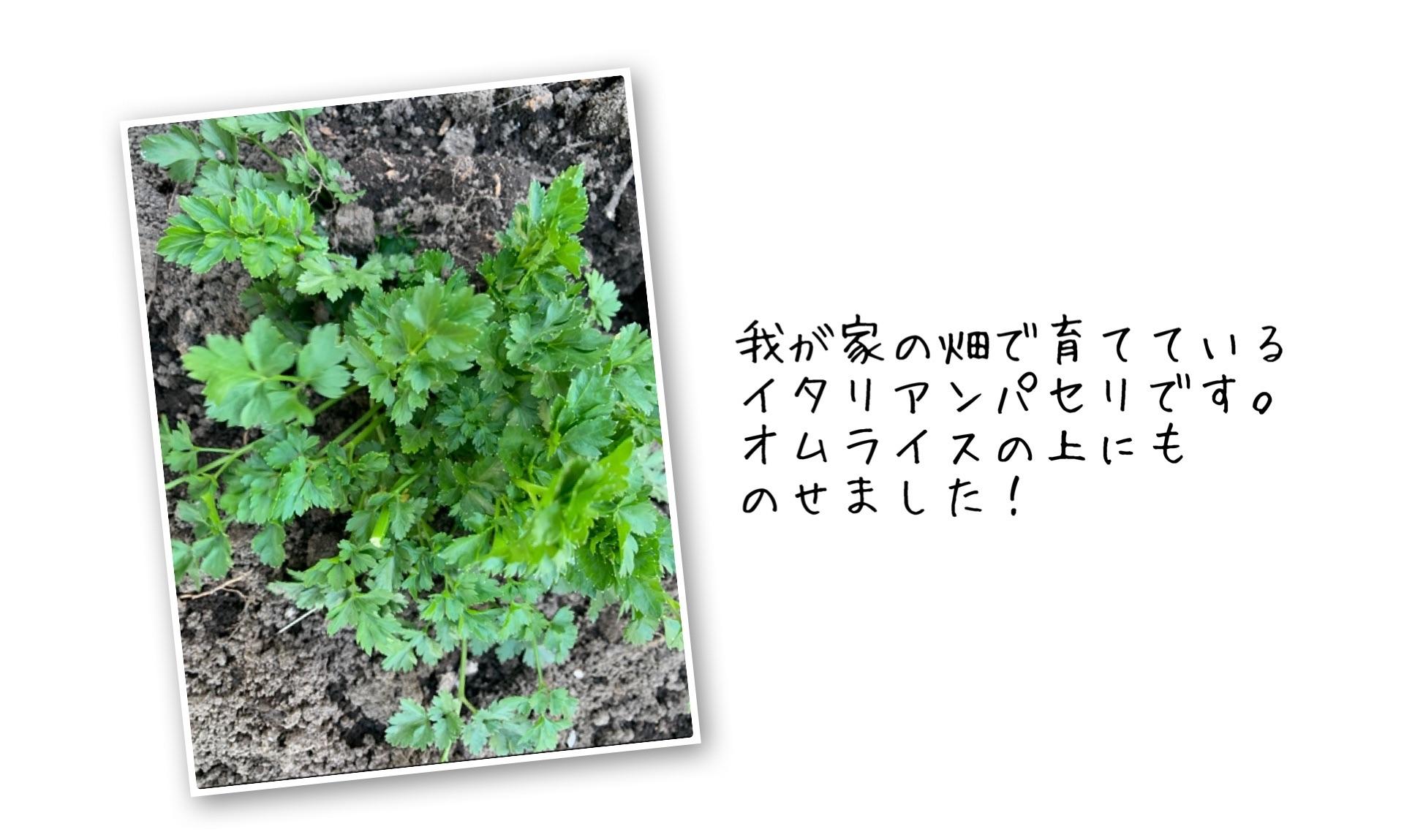 f:id:ikiruikeru43:20200502232705j:image