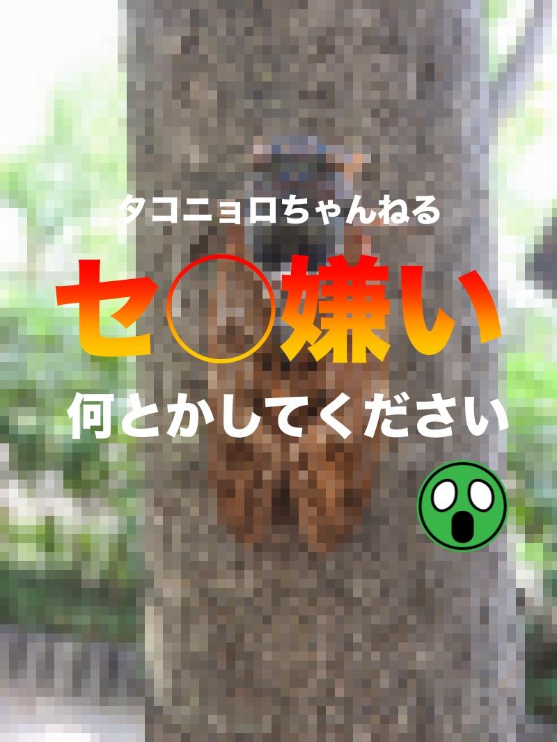 f:id:ikizuraitako:20210818063148j:plain