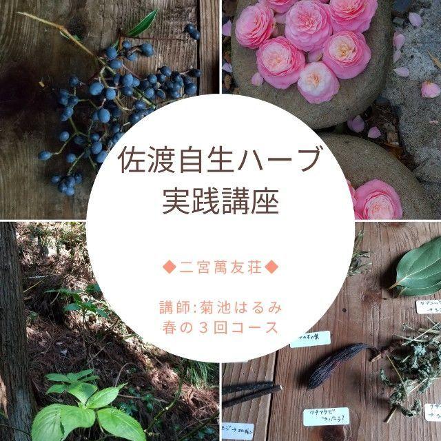f:id:ikkakinokinoha0401:20210406235956j:image