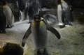 [大阪][水族館][海遊館][ペンギン]