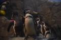 [水族館][ペンギン][江ノ島]