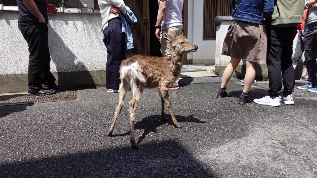 f:id:ikkoshinagawa:20180505154132j:image