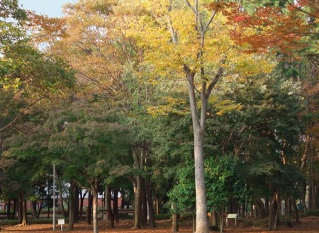 f:id:ikomanokaze:20091112165311j:image