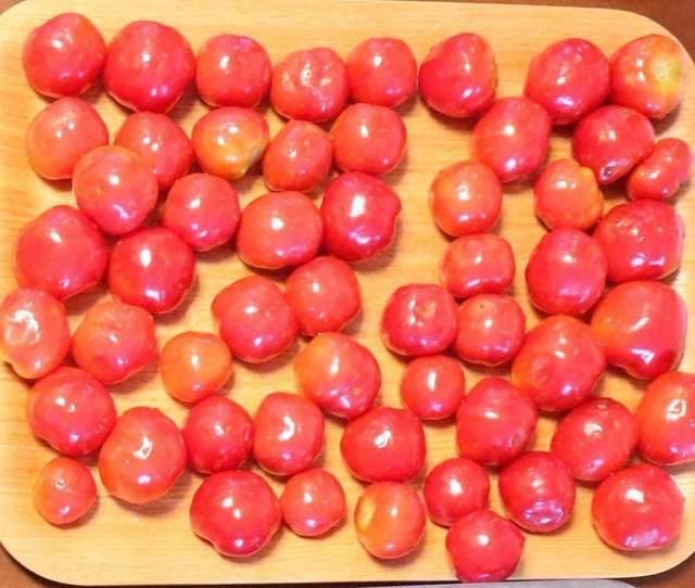 シェア畑のデメリット プチトマトの写真