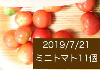 シェア畑の収穫量 ミニトマトの写真3