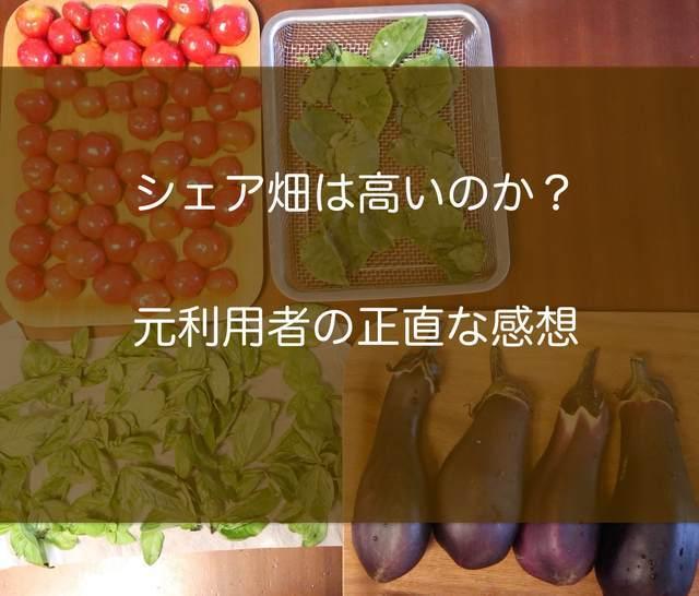 シェア畑は高いのか?野菜の写真
