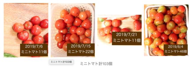 シェア畑は高いのか ミニトマトの写真