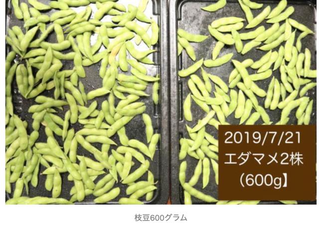 シェア畑は高いのか 枝豆の写真