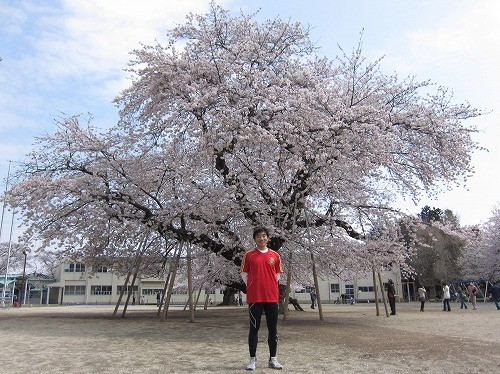 Old cherry blossoms @ Manabe 2011/04/10